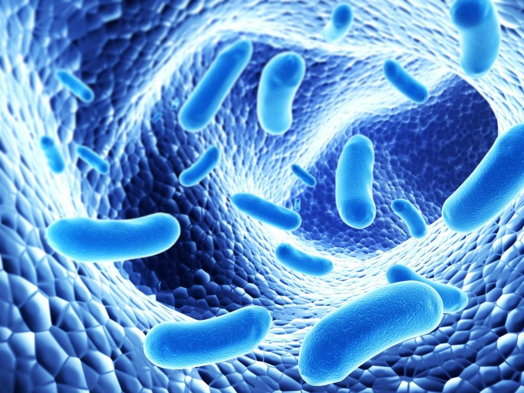 bonne bactérie intestinale